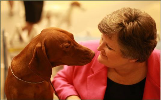 Vizsla Stud Dog Registry @ JCW, USA State - Texas, Vizslas