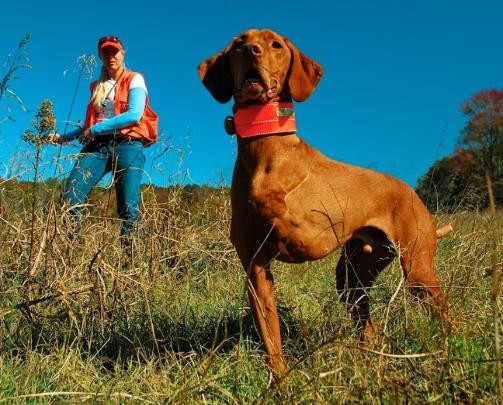 click here for Gun Dog Magazine