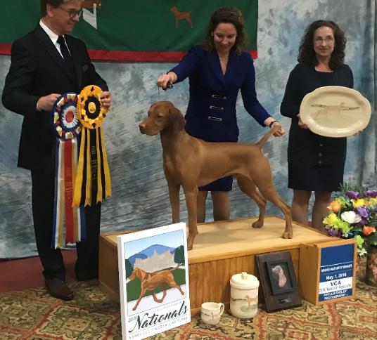 Vizsla Stud Dog Registry @ JCW, USA State - New Jersey