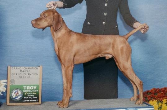 Vizsla Stud Dog Registry @ JCW, USA State - Connecticut, Vizslas